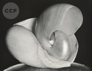 Scott Nichols Gallery, Edward Weston Shells, AIPAD