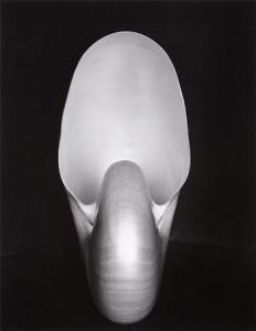 Edward Weston, Nautilus Shell, Silver print