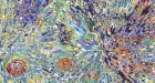 Current Exhibitions - David Allen Peters