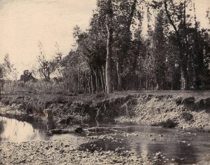 Andre Giroux, 'Landscape with riverbank'. c. 1855. Salt print from waxed paper negative. Courtesy Charles Isaacs Photographs, New York. AIPAD