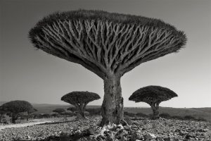 Beth Moon, 'Shebehon Forest', 2010. Courtesy the artist and Vision Neil Folberg Gallery, Jerusalem. AIPAD
