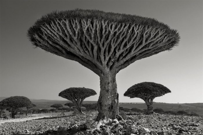 Beth Moon, 'Shebehon Forest', 2010. Courtesy the artist and Vision Neil Folberg Gallery, Jerusalem