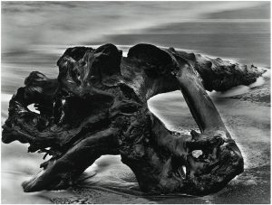 Wynn Bullock, 'Driftwood', 1951. Silver gelatin print. © and courtesy Bullock Family Photography, LLC and Weston Gallery, Carmel and PGI, Tokyo. AIPAD